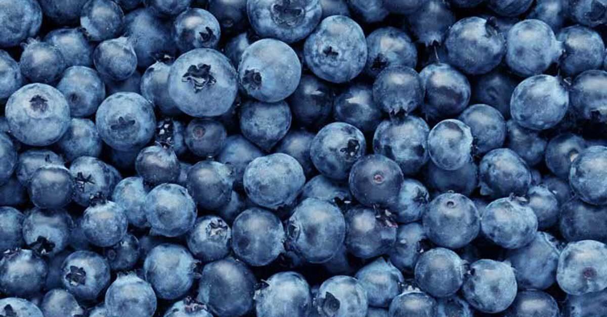 blueberries-1200×628-facebook-1200×628